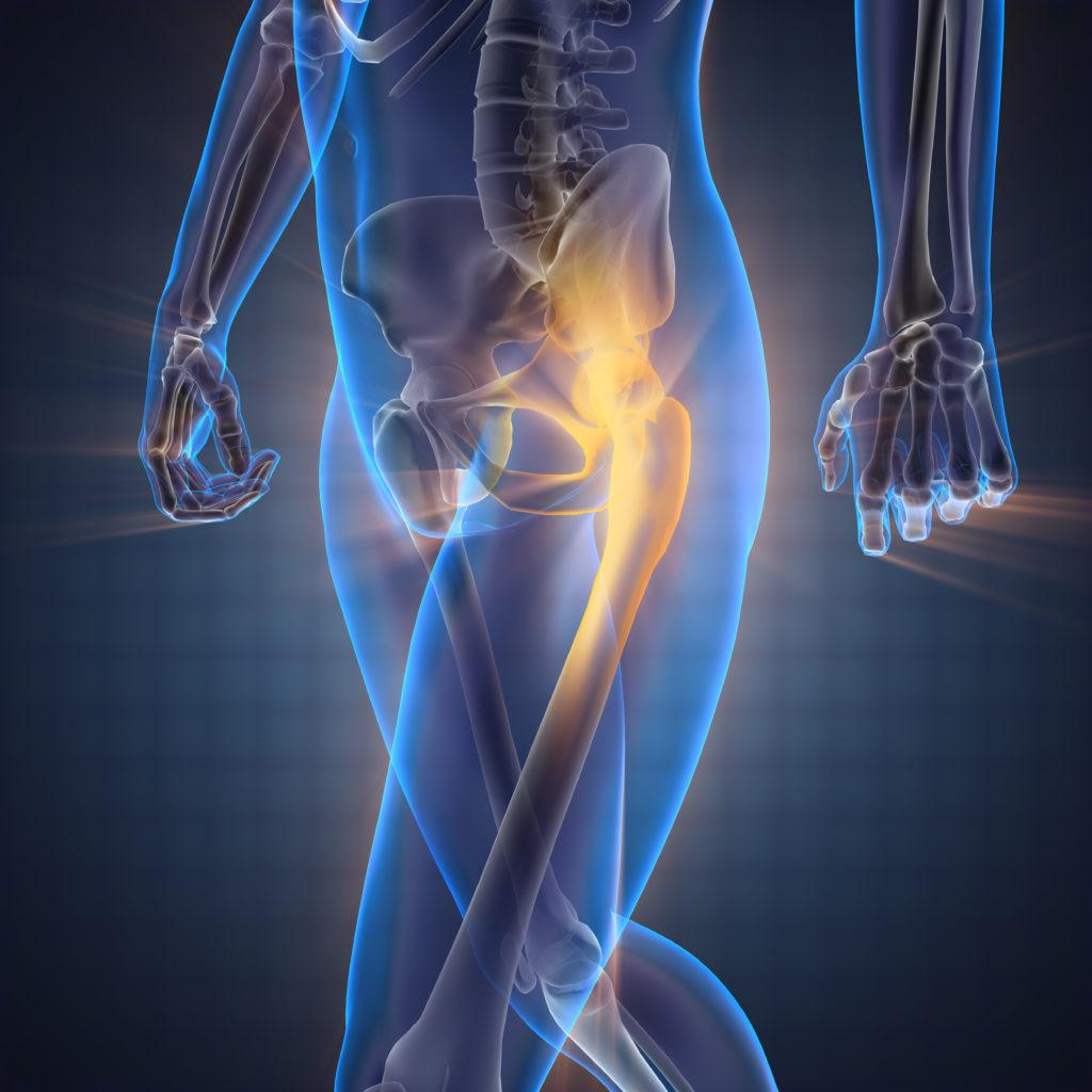 human bones radiography